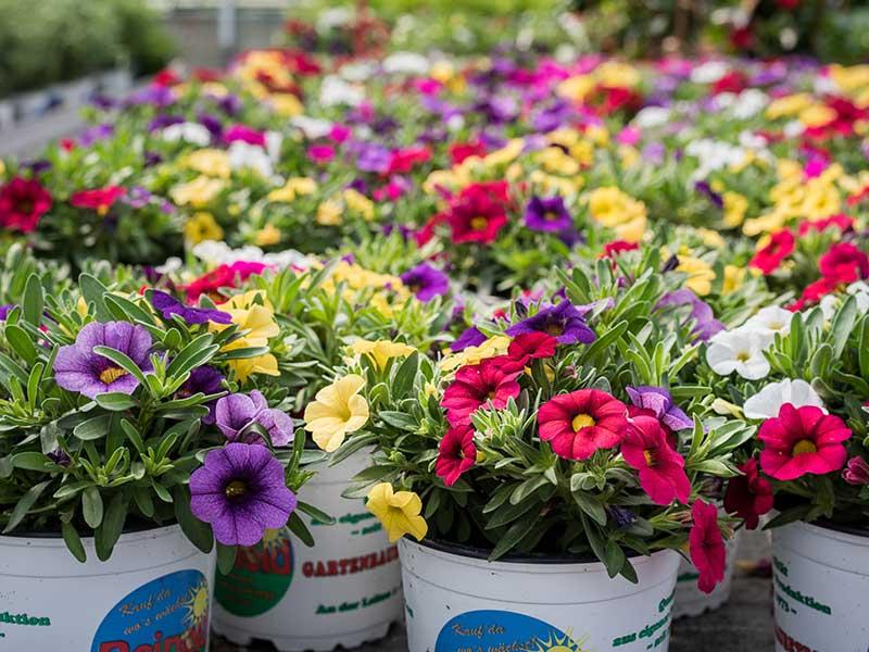 Ideal für Ihre Blumen: Reinold's Blumenerde